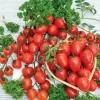 Гагарин fruit (фем) 5 сем -2500р